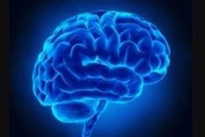 سفیران مغز و شناخت برای ترویج علوم و فناوریهای شناختی به مدارس میروند