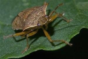 حشرات به کمک دانشمندان آمدند