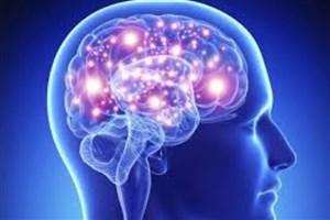 ارتقای دانش مغز در میان دانش آموزان کشور