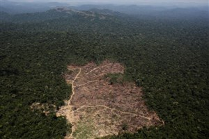 افزایش قطع درختان آمازون در کشور برزیل