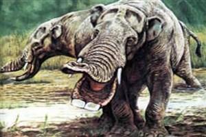انسان عامل انقراض پستانداران بزرگ نیست