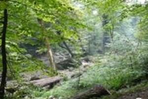 ارزشگذاری محصولات بازاری پارک جنگلی سراوان انجام شد