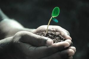 راهکار 8 مرحله ای دانشمندان برای محیط زیست