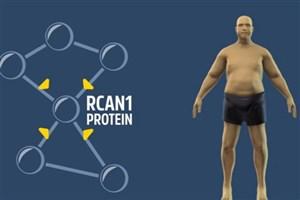 حذف ژن چاق کننده از بدن موش