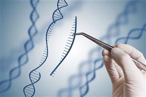 ژن درمانی روش جدید درمان اختلالات خونی
