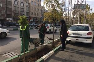 فضای سبز خیابان پیروزی جان دوباره میگیرد