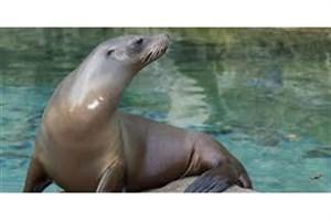 کشتار ۱۸ شیر دریایی در سیاتلِ آمریکا