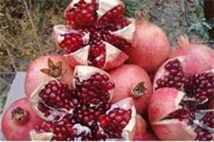 احیای آیینهای دیرینه شب یلدا/ برگزاری اولین «جشنواره انار» در غرب تهران