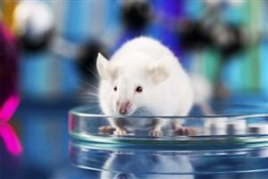 بررسی نحوه توزیع دارو در بدن با روشهای تصویربرداری پزشکی هستهای