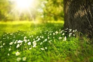 حافظه گیاهان گلدار چگونه کار می کند