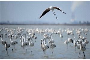 وضعیت اضطرار شدید و بسیار بحرانی  خلیج گرگان و تالاب میانکاله