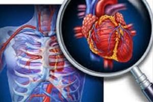 چگونگی سازگاری برخی از سلول های قلبی با فشارخون بالا