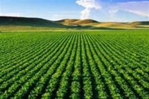 فناوری بیولوژیک راه کشاورزی پایدار را هموار میکند