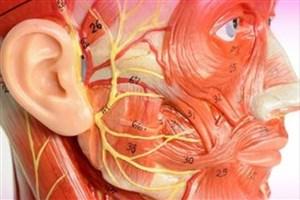افزایش امیدواری برای درمان نواقص و آسیب های سر و دهان با استفاده از سلول درمانی