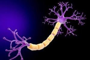 بازبرنامه ریزی مستقیم سلول های خون به سلول های بنیادی عصبی