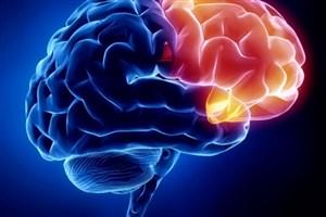 دسترسی بیسابقه به سیستم عصبی با ساخت آرایههای الکترودی نفوذی