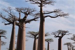مرگ درخت زندگی