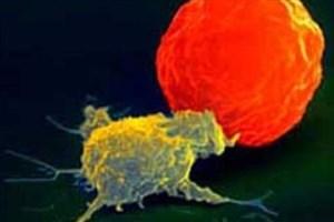 سوپر سلول های سیستم ایمنی چگونه بالغ می شوند؟