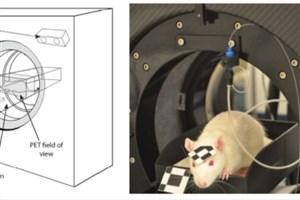 اسکن مغز حیوانات در حالت هوشیاری امکانپذیر شد