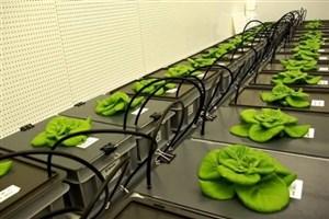 امکان کاشت گیاه در فضا فرآهم شد