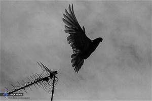 صاحب کبوتر به کلانتری مراجعه کند