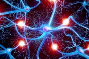 کشف منبعی فراوان برای سلول های عصبی