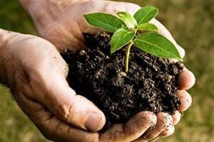 کودهای زیستی تولید محصول سالم غذایی را تضمین میکند