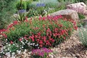 کاهش هزینههای آبیاری در کشت گیاهان مناطق بیابانی