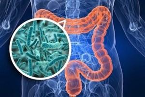 میکروبیوم روده می تواند سن را مشخص کند