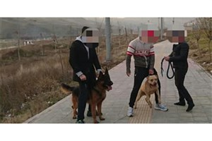 جزییات  حمله دو سگ به دختر ۱۰ ساله در لواسان/برای شستشوی زخمها، بهار را بیهوش میکردند