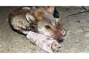 عامل حیوان آزاری در زیرکوه بازداشت شد