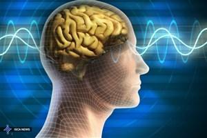 علوم اعصاب اجتماعی دنیایی پر از کشفهای علمی هیجانانگیز