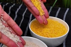 برنج تراریخته با عملکرد بالا در چین تولید شد