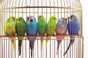 تولید شیرخشک و اسپری ضدانگل پرندگان زینتی در کشور