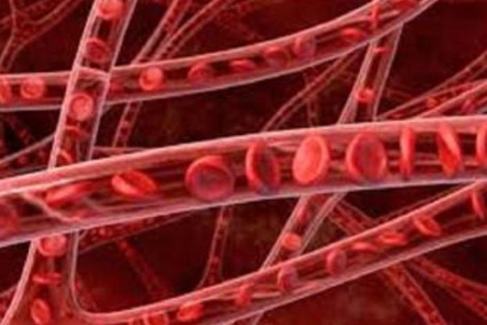سلول عروقی