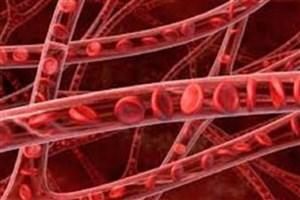 تولید سلول های عروقی با کیفیت بالا از طریق تکنولوژی