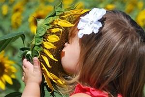تقویت حس بویایی با افزایش سلولهای بنیادی عصبی