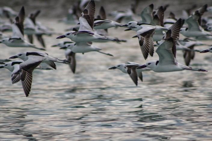 ممنوعیت شکار پرندگان