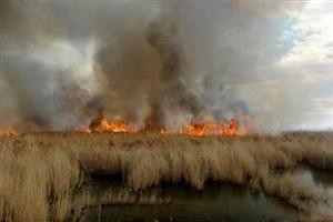 گیاهان از آتش سوزی خبر می دهند