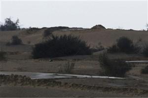 واکنش سازمان جنگلها به خبرمالچپاشی در زیستگاه حیات وحش خوزستان
