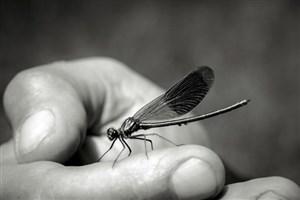 انقراض حشرات تا 1 قرن دیگر