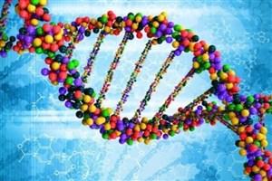 نوپایی در توالییابی تحلیل دادههای ژنتیکی نخستین شد
