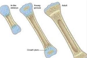 گام هایی در جهت تولید استخوان با درجه بالینی