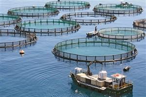 صنعت «پرورش ماهی در قفس» در استانهای ساحلی کشور توسعه مییابد