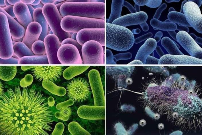 میکروارگانیسمها