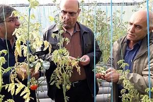 راهاندازی نخستین طرح آکواپونیک گلخانهای در واحد گرمسار
