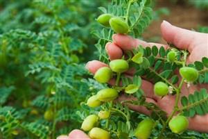 کاهش تلفات برداشت محصولات کشاورزی با ورود فناوریهای نو