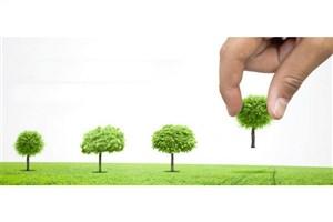 کاشتن  2 میلیون نهال هفته درختکاری در پایتخت