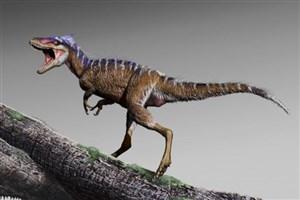 کشف فسیل یک تیراناسورمیلیون ساله