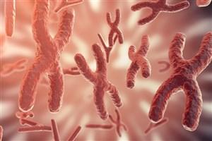 نبود یک ژن باعث بهبود سکته مغزی میشود